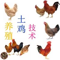 厂家供应养殖土鸡的技术质量保障
