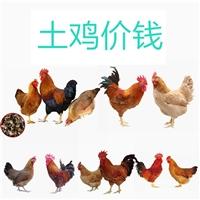 厂家供应土鸡价钱质量保障