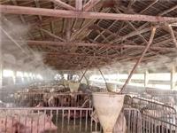 高压喷雾除臭安装 喷雾除臭 养殖场喷雾除臭