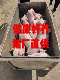 种猪场母猪多钱有小猪仔猪苗太湖
