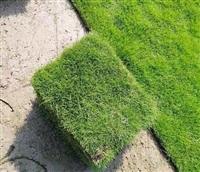 郴州道路绿化草皮价格