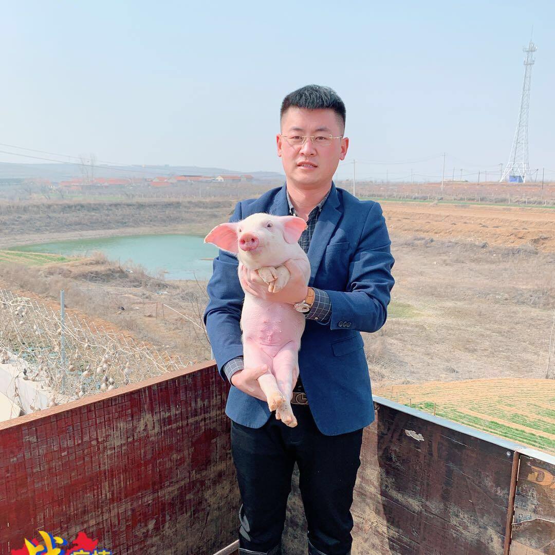自贡养猪场猪苗 四川种猪场价格 小猪价格下降