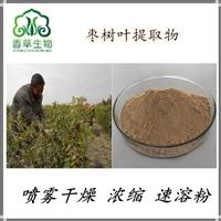枣树叶提取物皂苷 供应东方睡叶提取物浓缩粉 酸枣叶提取物黄酮