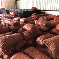 魔芋种子种植技术视频 10吨魔芋种子出售价格
