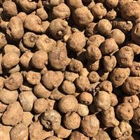 曲靖魔芋种子 安康魔芋种子供应陕西神木煤厂家