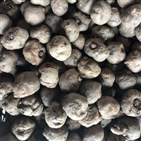 魔芋种子消毒防病 魔芋种子育种公司