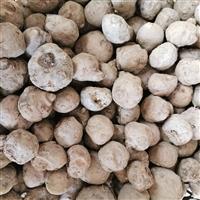 恩施市魔芋种子哪里买 曲靖新农贸市场卖魔芋种子情况