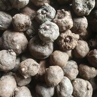 万源哪里有卖魔芋种子价格 四川有魔芋种子吗