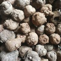 魔芋种子如何传播中国声音 高山魔芋种子