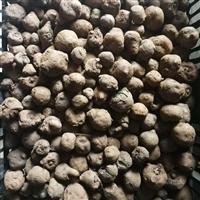 一亩地要多少厅魔芋种子 魔芋种子植物图片