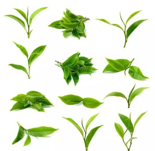 合肥茶叶保鲜冷库/合肥茶叶保鲜冷库设备公司/茶叶保鲜冷库价格
