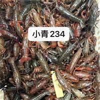 湖北潜江小龙虾鲜活清水活虾30/50斤234钱硬规格活体青虾红虾包邮