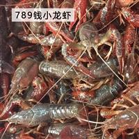 湖北潜江清水稻田养殖新鲜活虾青红鲜活小龙虾30/50斤789特大活体