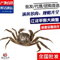 168母蟹2两母蟹27规格38规格硬规格大闸蟹/小螃蟹/小河蟹批发价格