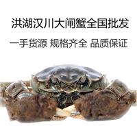 湖北洪湖生态大闸蟹 各种规格 基地出货白底鲜活大闸蟹产地批发