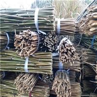西红柿架竹竿批发 2米2-2米5菜架条 竹条 2.5米毛竹 京西竹业