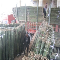 小竹竿批发 大量批发江西3米农用小竹竿