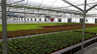 农业温室大棚 蔬菜温室大棚骨架 宏拓 新型温室大棚设计