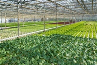 农业大棚 农业大棚厂家 农业大棚价格 农业大棚建造 定制农业大棚