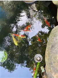 最z简单的鱼池水循环过滤系统
