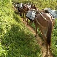 西安市骡子运输搬运 砖头马帮运输队