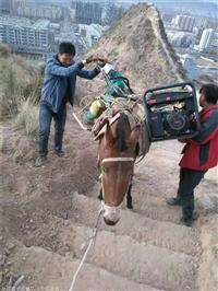 商洛市石头水泥运输 砖头马帮运输队