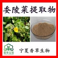 委陵菜提取物委陵菜粉原粉 供应翻白草提取物多糖