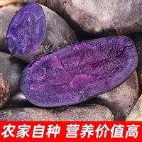 出售黑土豆种子,黑金刚土豆种子公司,黑金刚土豆种子价格