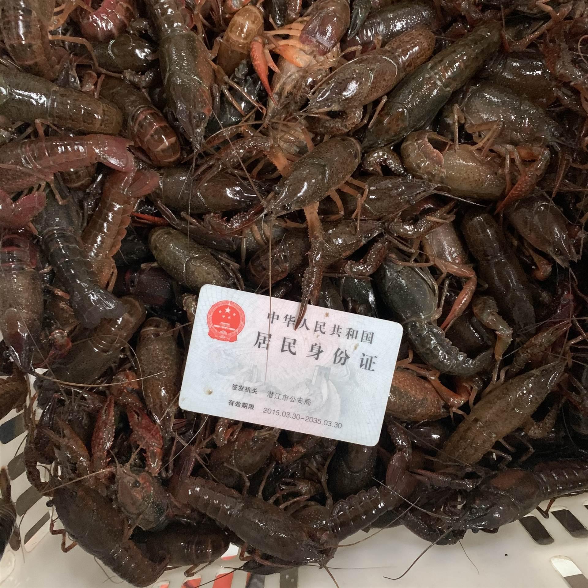 2021年新上市3月份234錢潛江小龍蝦規格品質一覽原產地批發全國