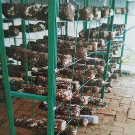 广西烨方   蘑菇网架