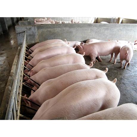 科技养猪场养猪信息化系统