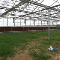 温室大棚 九云智能温室 连栋温室大棚打造