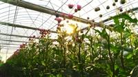 云南昆明鮮花大棚管廠家批發,種鮮花當然要選這種管材了