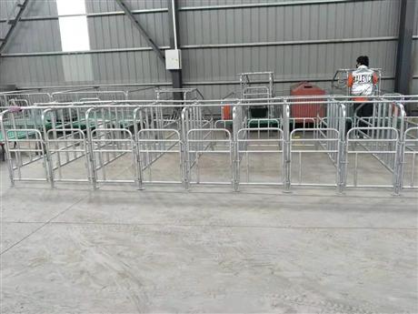 养猪用定位栏 母猪落地式限位栏 规格可定制