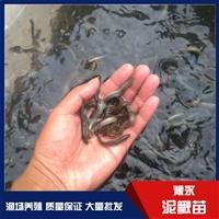 台湾12BET苗出售 12BET苗12博手机客户端 12BET苗出售 大量批发